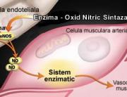 oxidul-nitric